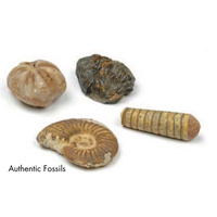 Dig and Discover - Authentic Fossils