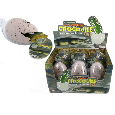 Hatching Crocodile Egg
